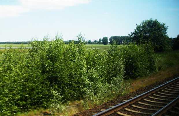 Camino de Hamburgo en tren