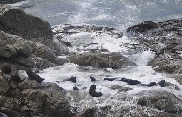 Colonia de focas en Ohau Point