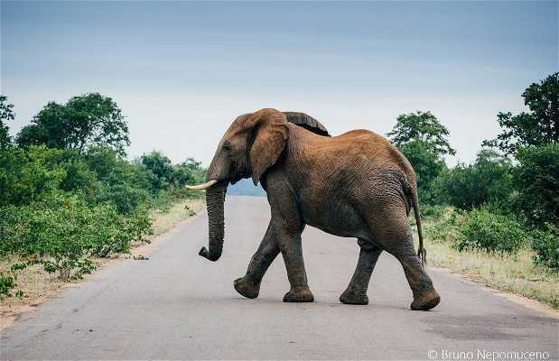 Parco Nazionale Kruger