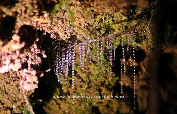 Glow Worms Track