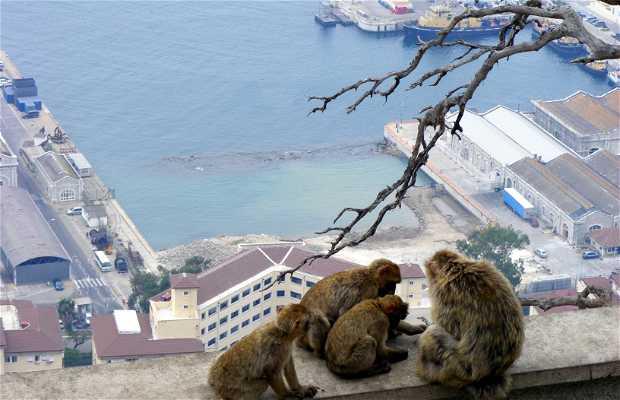 Le repaire des singes