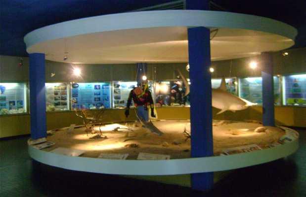 Museu Oceanográfico Professor Eliezer de Carvalho Rios