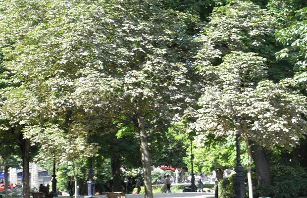 Piazza Gambetta di Bordeaux
