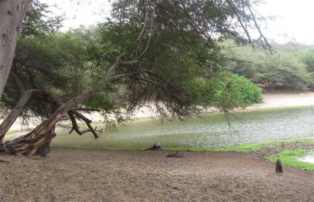 Bosque seco ecuatorial de Cañoncillo