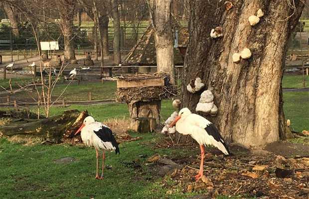 Zoologico de Budapest