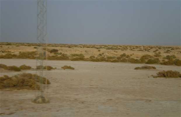 Chott El-Gharsa