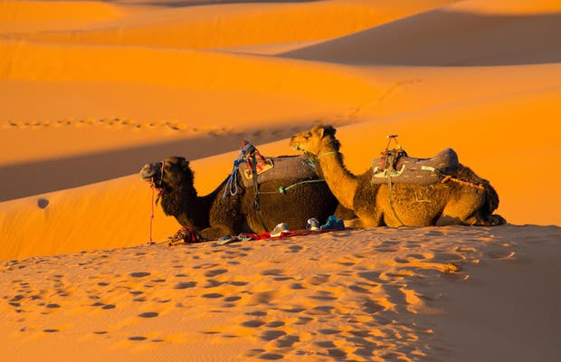 Exciting Morocco Tours