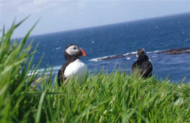 Islas Treshnish