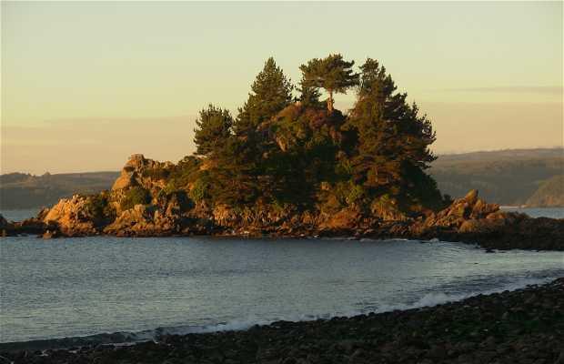 Spiaggia Coliumo in Cile