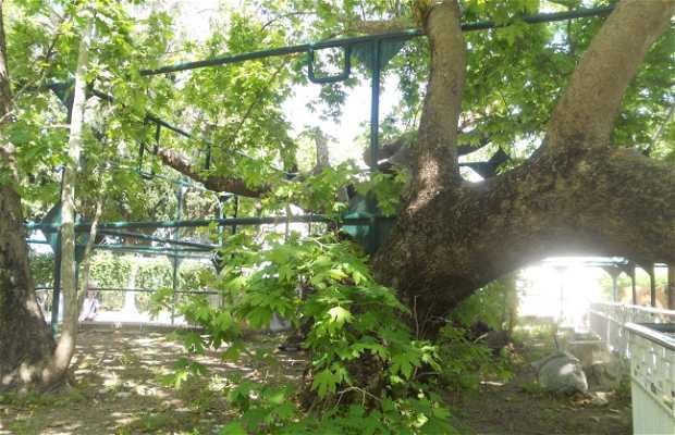 Árvore Hipocrates