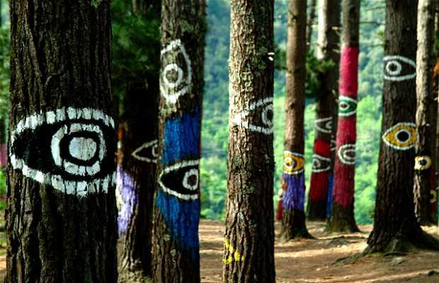 Il bosco di Oma