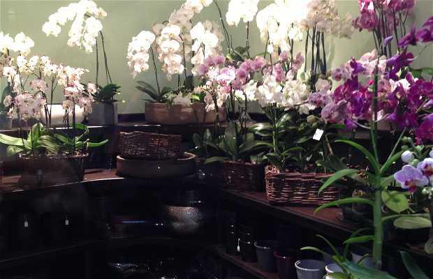 Yannick Vincent orchidéiste - CLOSED