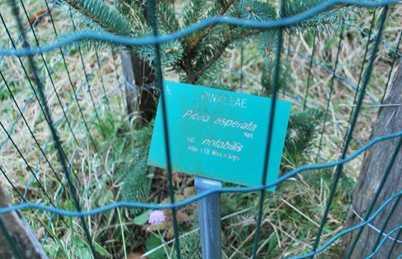 Arboretum Henri Gaussen