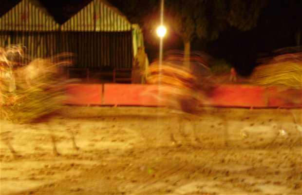 Spectacle de chevaux et de danse andalouse