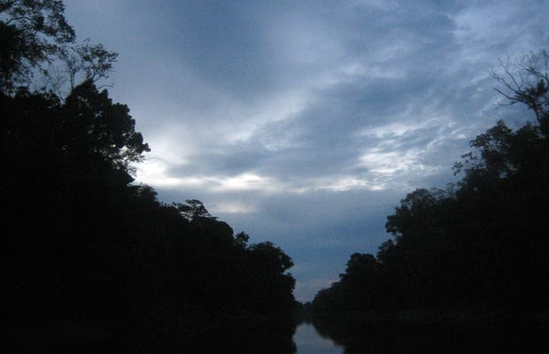 Nocturnal expeditions in the Peruvian Amazon.