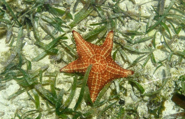 Crawl Cay – Cayo Coral