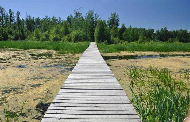 Amisk Wuche trail