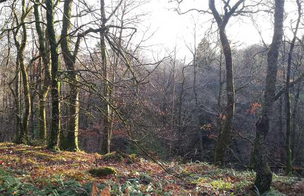 Bosques de Laggan