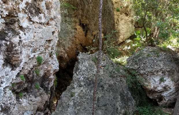 """La Forêt"" de la Cabrentá"