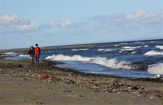 Plage à Punta Arenas