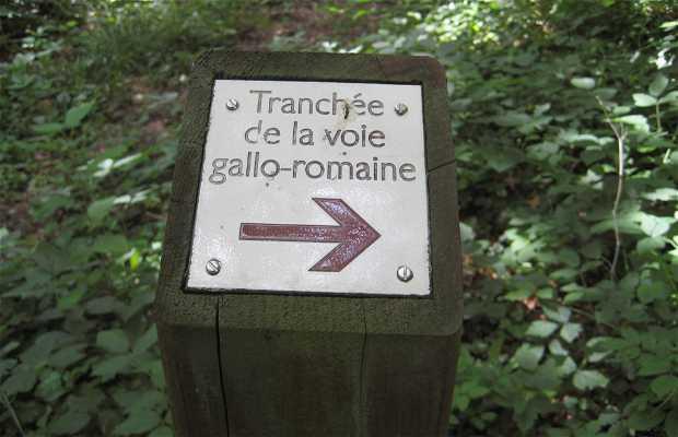 La tranchée de la voie gallo romaine