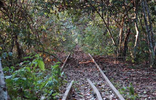 Foresta di Rondonia