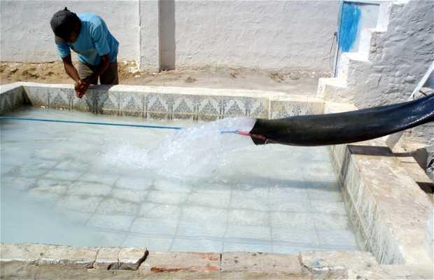 Dromadaires récupérant de l'eau