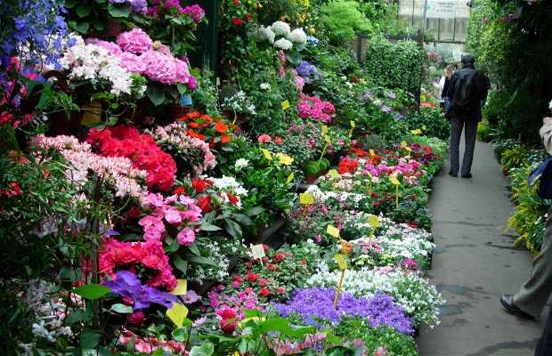 Marche aux Fleurs - Mercado de las Flores
