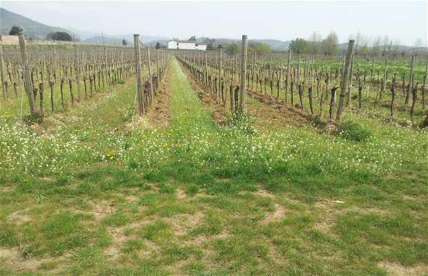 Sociedad Agrícola Borgo Santa Giulia SRL