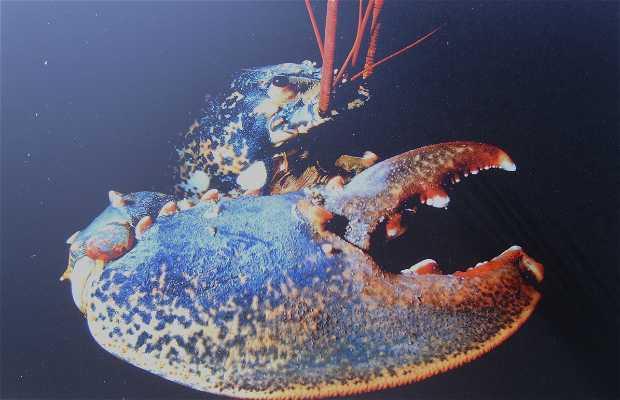 Exposition planète mer