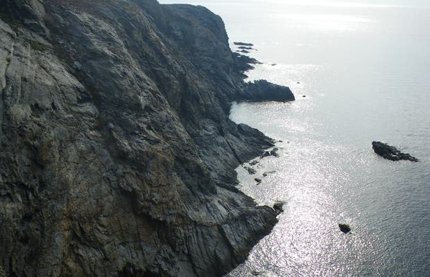 El Cabo Bear