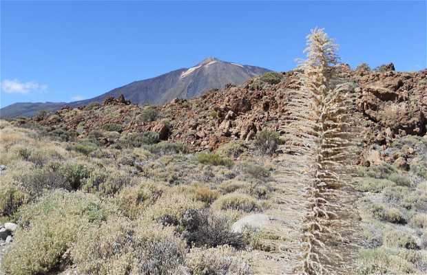 Majúa Mountain - Abades