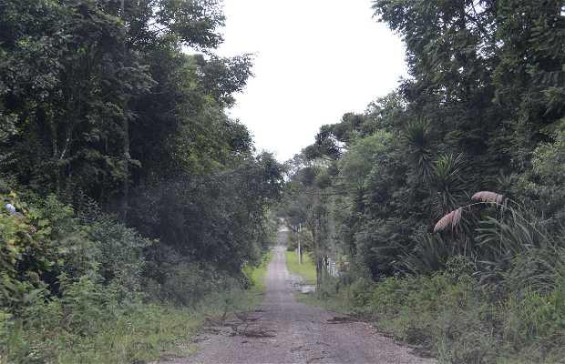 Vale dos Pinheiros