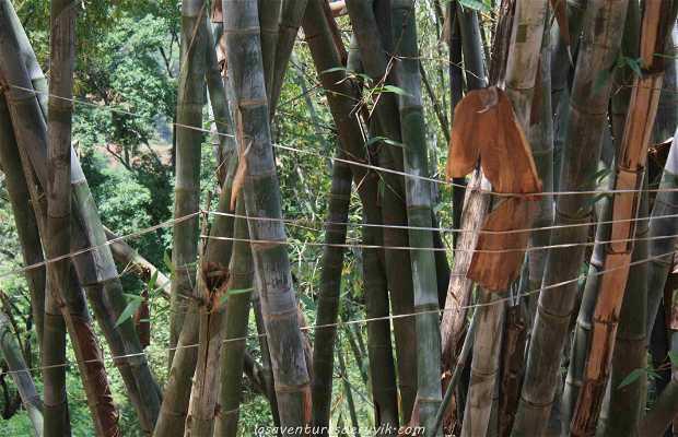 Bosques de Bambú