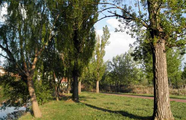 Parque Segundo Sotillo