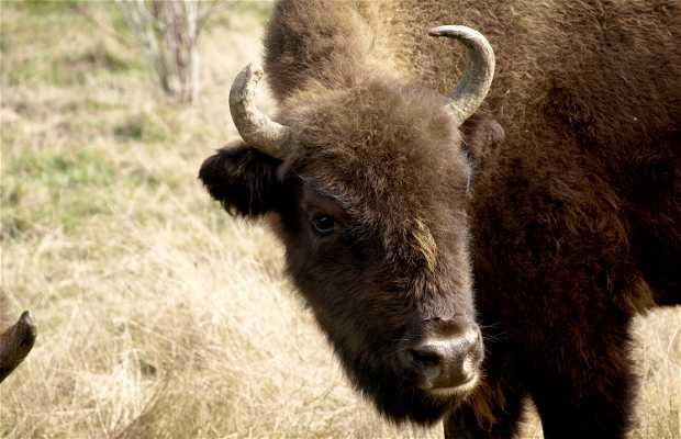 Reserva del Bisonte Europeo