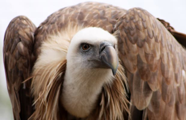 Cim de la Aguilas
