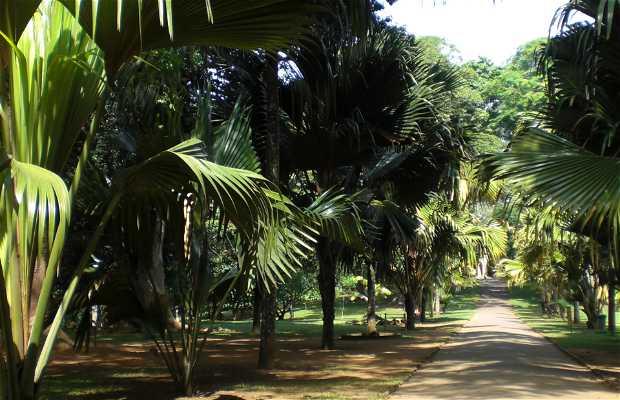 Avenida de los cocos de mar