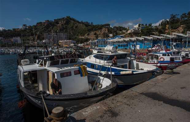 Descarga y subasta de pescado en Blanes