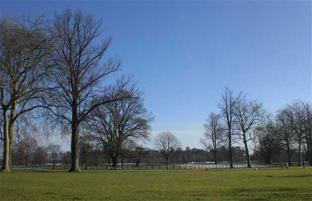 Blenheim Park