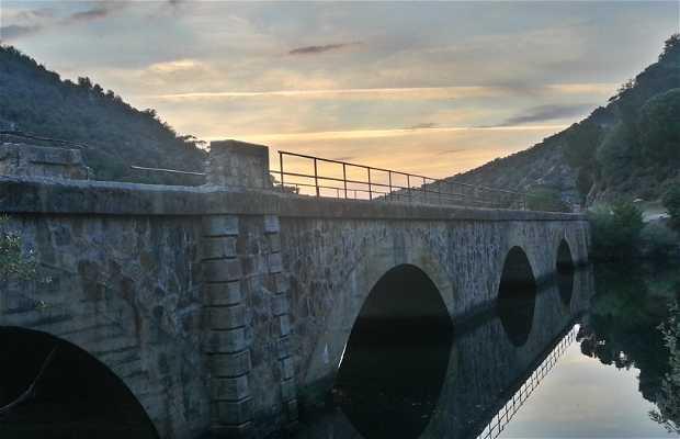 Puente sobre el pantano de picadas