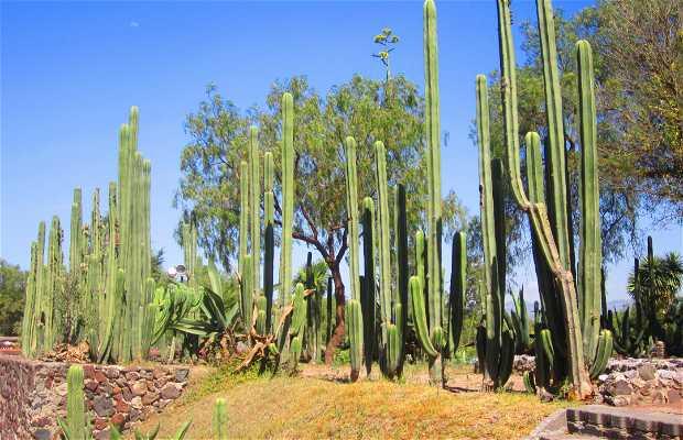 Jardín Botánico de Teotihuacan