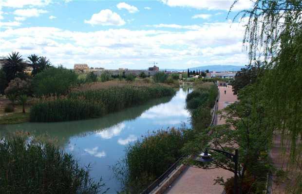 Walk by the River Segura
