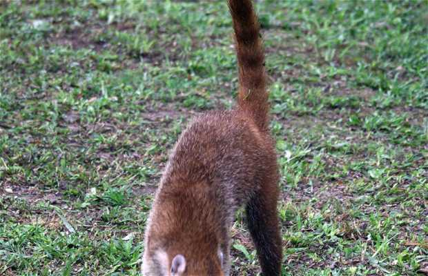 Observación de Fauna en Tikal