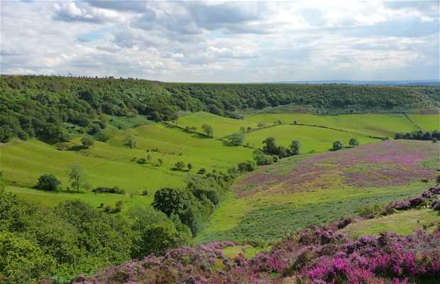 NorthYorkshire Moor Park