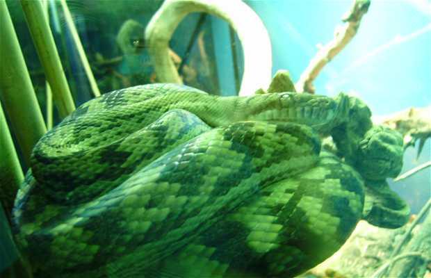 Exposition reptiles et amphibiens