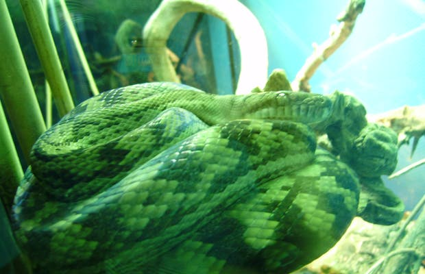 f Reptiles and Amphibians Exhibitions