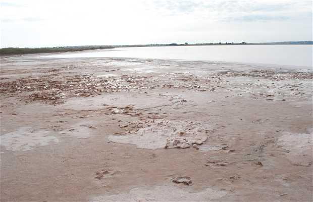 Lagon rose de Torrevieja