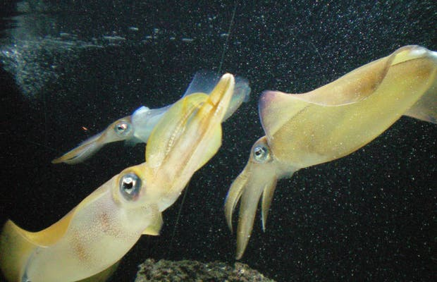 Sunshine International Aquarium