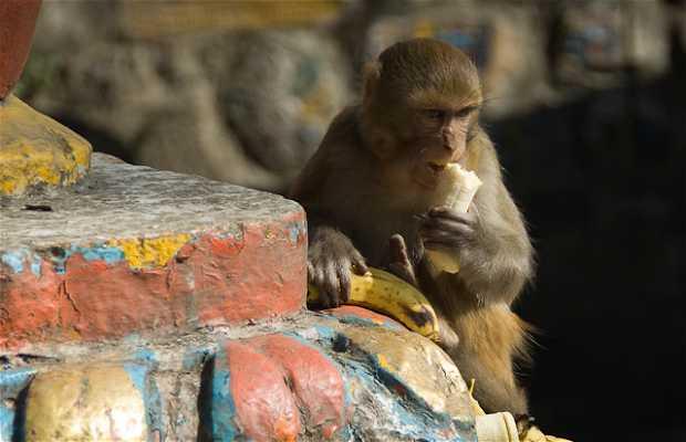 Templo Swayambhunath